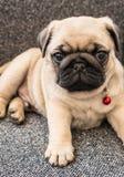Barro amasado del perrito Imágenes de archivo libres de regalías