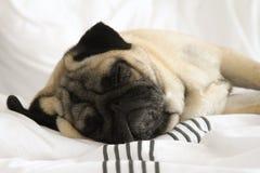 Barro amasado el dormir Fotos de archivo