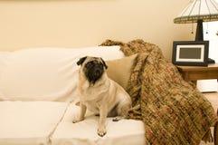 Barro amasado lindo en el sofá Imagenes de archivo