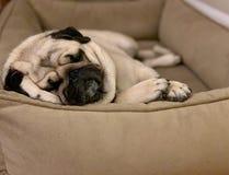 Barro amasado lindo soñoliento de Naptime- que miente en su cama imagen de archivo