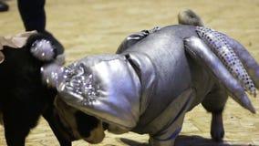 Barro amasado masculino en el traje de plata cósmico que tiene fecha con el perro femenino elegante vestido metrajes