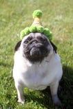 Barro amasado smirking llevando un sombrero de la fiesta de cumpleaños Imagen de archivo libre de regalías