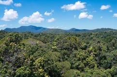 Barron Gorge Rainforest och kanter arkivbild