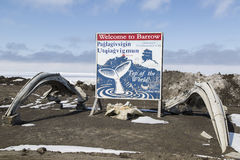 Barrow Alaska. Welcome to Barrow sign surrounded by whales bones. Barrow is the largest city of the North Slope Borough in the U.S. state of Alaska and is royalty free stock images