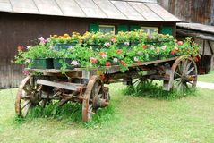 Barrow with flowers. A metal barrow with beautiful flowers in the garden stock photo