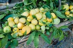 Barrow full with Lemons. Decorative wooden barrow full with fresh lemons Royalty Free Stock Photography