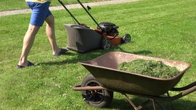 Barrow on meadow with cut grass and worker man cut lawn with mower. 4K stock footage