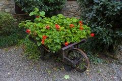 Barrow of Roses. A barrow full of plants and roses, Grazzano Visconti (PC), Italy royalty free stock photos