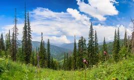Barrskog i bergen fotografering för bildbyråer