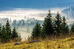 Barrskog i dimmiga rumänska berg Royaltyfri Fotografi