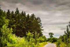 Barrskog mot himlen Royaltyfri Foto