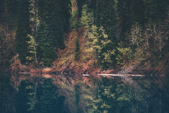 Barrskog- och sjöspegelreflexion Arkivbild
