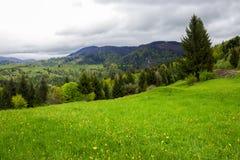Barrskog på en berglutning Arkivfoton