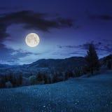 Barrskog på en berglutning på natten Royaltyfria Foton