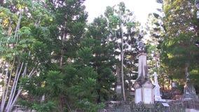 Barrträd fjädrade från dekorativt sörjer kottar i gammal kyrkogård arkivfilmer
