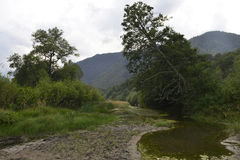 Barrträd i bergen Royaltyfri Fotografi