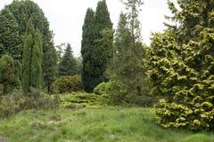 Barrträd i en pinetum i Nederländerna Royaltyfri Fotografi