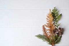 barrträd Naturlig bakgrund Conifefer bakgrund vita röda stjärnor för abstrakt för bakgrundsjul mörk för garnering modell för desi Royaltyfria Bilder
