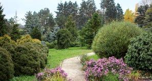 Barrträd och pil i höstträdgård Royaltyfri Foto