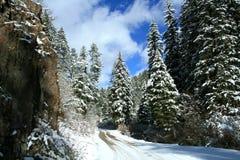 barrträd snows tidigt treesvintern Royaltyfri Fotografi
