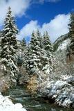 barrträd snows tidigt treesvintern Arkivbild