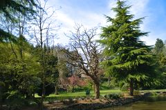 Barrträd vid sjön royaltyfri bild