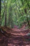 barrträds- östligt ukraine för Europa skogbana trä Royaltyfri Bild