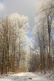 barrträds- östligt ukraine för Europa skogbana trä Fotografering för Bildbyråer