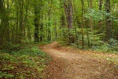 barrträds- östligt ukraine för Europa skogbana trä