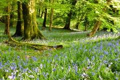 barrträds- östligt ukraine för Europa skogbana trä Royaltyfria Bilder