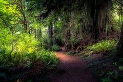 barrträds- östligt ukraine för Europa skogbana trä royaltyfri fotografi