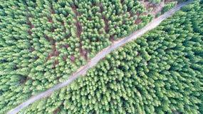 Barrträdskog och vägen från det ovannämnt Royaltyfria Bilder