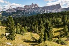 Barrträdskog på den Croda da Lago massiven i södra Tyrol Dolomites Royaltyfria Bilder