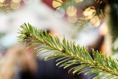 Barrträd på julmarknad Royaltyfria Bilder