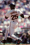 barry bonds arkivbild