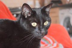 Barry katten royaltyfri foto