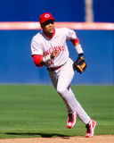 Barry Larkin Cincinnati Reds Royaltyfri Bild