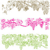 Bars créateurs de raisin Image stock