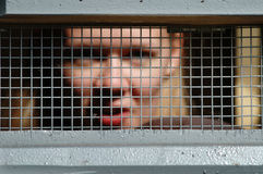 Bars of the prison. And face of prisoner royalty free stock photos