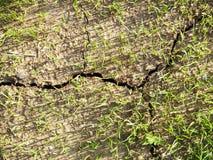Barst in de grond Stock Fotografie