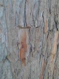 Barst dell'albero Fotografie Stock