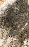 Barst op oude houten stomp Stock Afbeelding