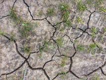 Barsten in de droge aarde met gras die groeien Stock Foto