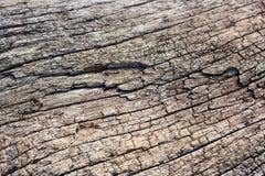 Barsten en patroon van hout Stock Foto's