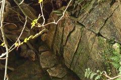 Barsten op de rotsen stock fotografie