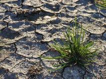 Barsten toe te schrijven aan droog klimaat Droog grasgras op harde droge klei royalty-vrije stock foto's