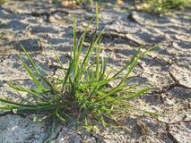 Barsten toe te schrijven aan droog klimaat Droog grasgras op harde droge klei stock afbeeldingen