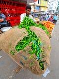BARSTENDE GROENE PAPRIKA'S, RAJASTHAN, INDIA Royalty-vrije Stock Afbeeldingen