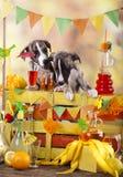 Bartenders in small puppies lemonade bar Royalty Free Stock Photo