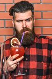 Bartending concept. Man in checkered shirt on brick wall background tastes drinks. Barman with long beard and mustache. And stylish hair on strict face holding Royalty Free Stock Photos